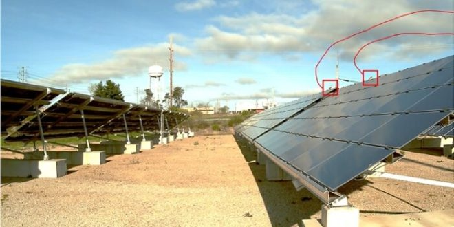 Valóban veszélyesek a napelemek az állatokra?