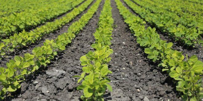Évente 2,5 milliárd tonna élelmiszer kerül a szemétbe egy új globális jelentés szerint