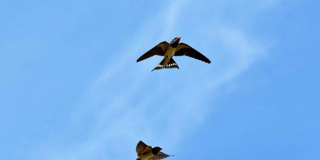 Kihalás fenyeget minden ötödik európai madárfajt